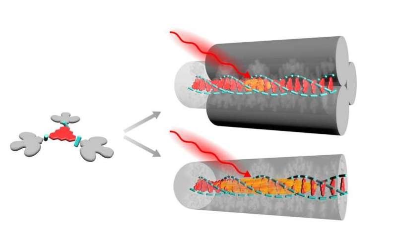 Transporting energy through a single molecular nanowire
