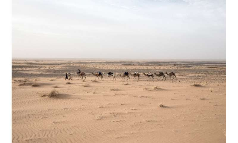 Travelling at a camel's pace provides a greater chance of spotting artefacts in the sand, Tillet says