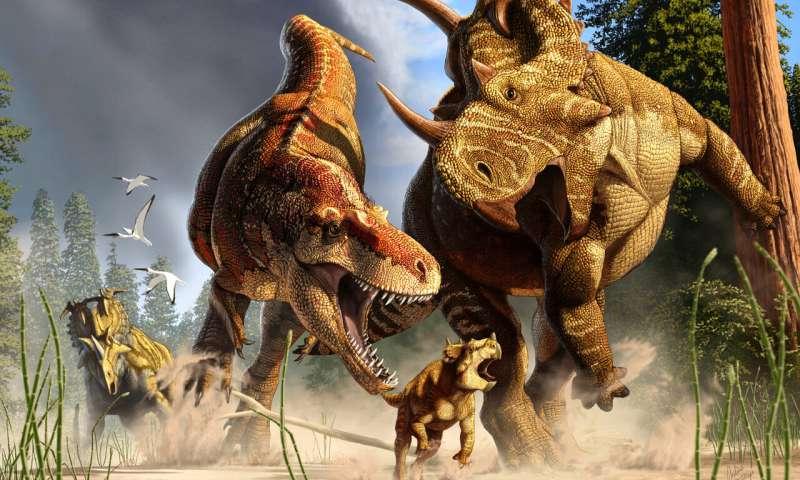 T. rex's long legs were made for marathon walking