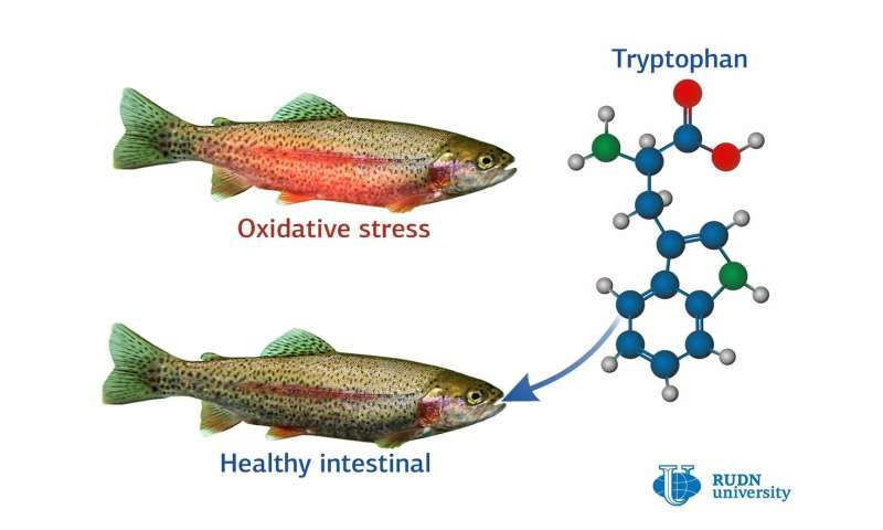 Tryptophan Supports the Work of Intestinal Tract in Trouts Under Stress, Says a biologist from RUDN University
