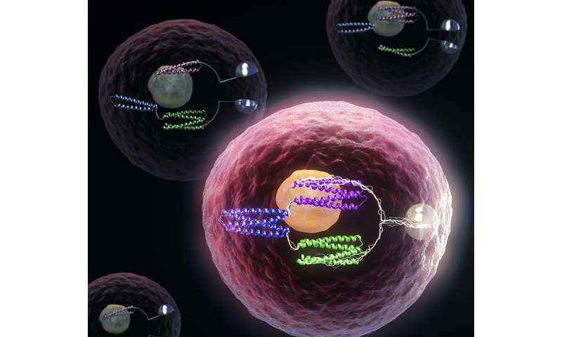 Turning cells into computers with protein logic gates