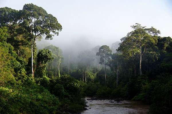 UM scientists play a direct role in identification of forests for protection in Borneo