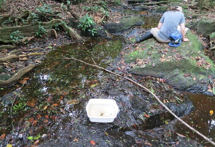 Undergraduate student discovers 18 new species of aquatic beetle in South America