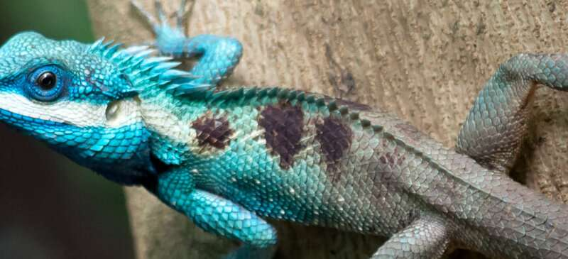 Under-regulated pet trade leaves thousands of species vulnerable