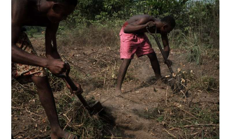 Undeterred by chronic oil pollution, fishermen in K-Dere village clear the land to plant cassava
