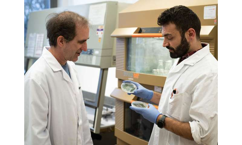 Unexpected discovery: Blue-green algae produce oil