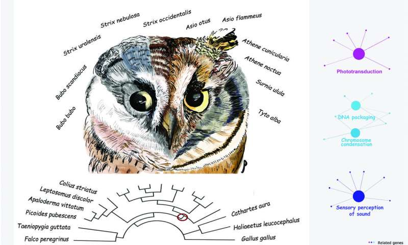 Unique Adaptations Allow Owls to Rule the Night