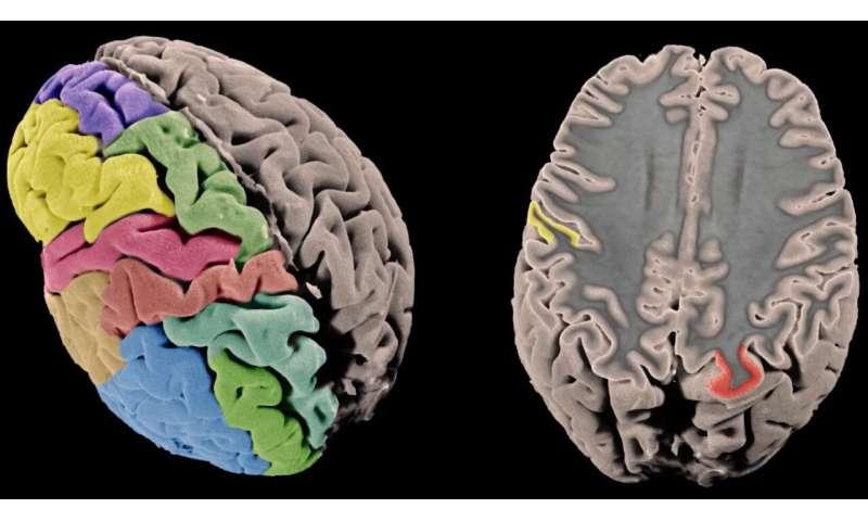 Unlocking genetic secrets of the grey matter