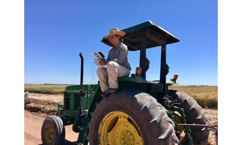 Los vehículos aéreos no tripulados ayudan a los mejoradores de trigo