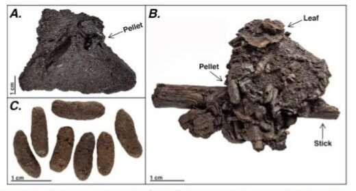 Unprecedented preservation of fossil feces from the La Brea Tar Pits