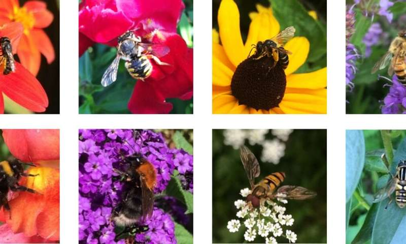 Urban bees: pollinator diversity and plant interactions in city green spaces