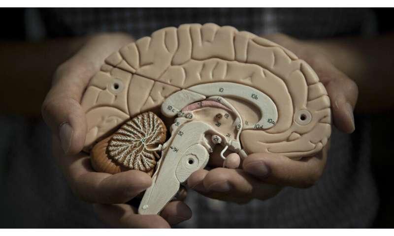 Using brain imaging to pierce the mystery of human behavior