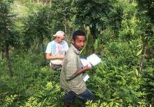 El cultivo de vainilla debajo de los árboles promueve la regulación de plagas