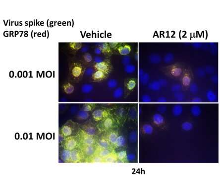VCU study shows the experimental drug AR-12 could be a promising COVID-19 treatment