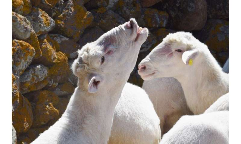 Virus genomes help to explain why a major livestock disease has re-emerged in Europe