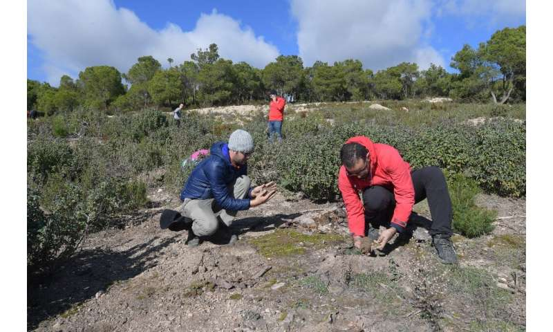 Volunteers  plant trees on the Kesra mountains in Tunisia's Siliana region