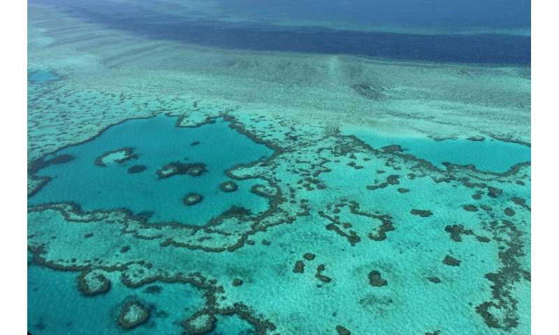 Warmer seas caused by climate change have damaged the health of the Great Barrier Reef, the world's largest coral system