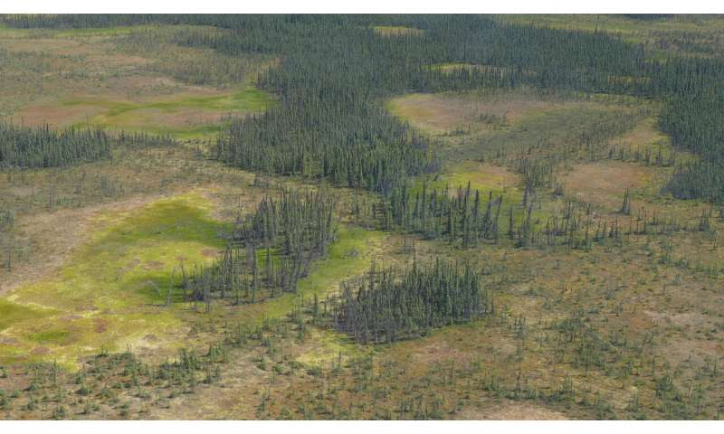 Water loss in northern peatlands threatens to intensify fires, global warming
