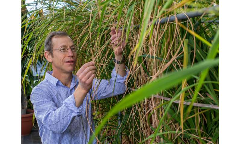 Weedy rice is unintended legacy of Green Revolution