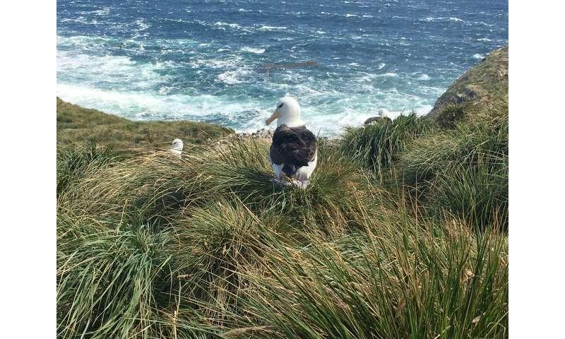 Where will the seabirds go?