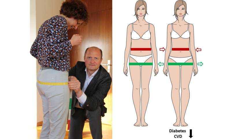 Why and to what extent a large hip protects from type 2 diabetes and CVD