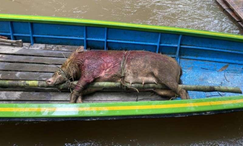 Por qué las campañas de la era COVID contra el consumo de carne silvestre no funcionan