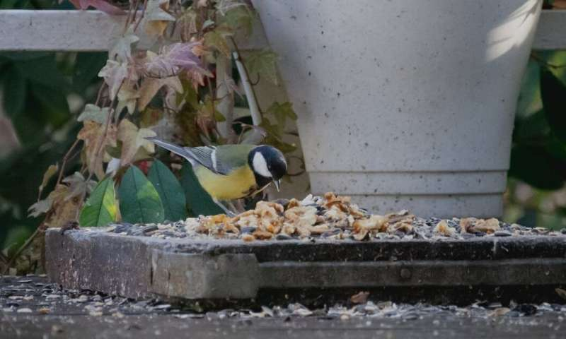 Why you may need to encourage social distancing around your bird feeder