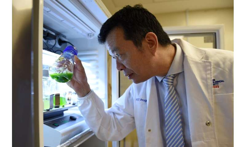 William Chen, director of the Food Science and Technology Programme at Nanyang Technological University, looking at microalgae s