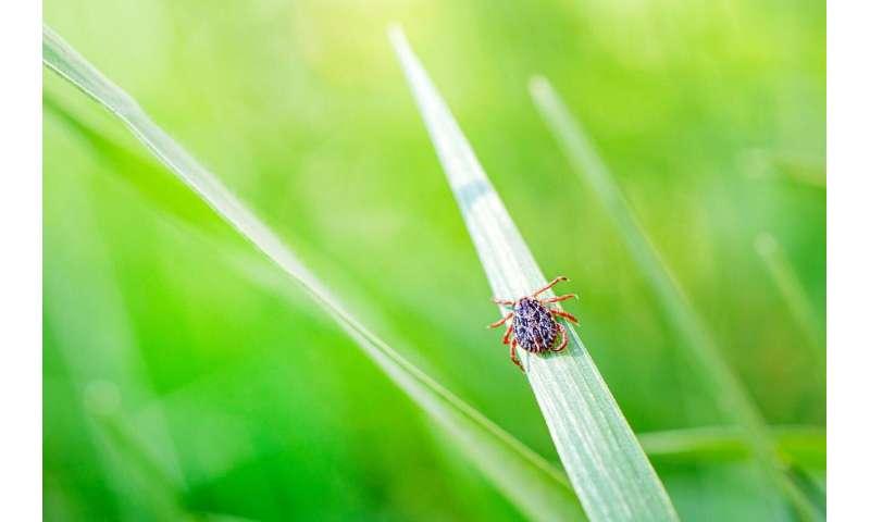 Wistar creates a new synthetic DNA vaccine against Powassan virus