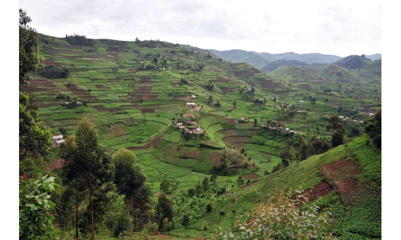 With 30,000 surveys, researchers build the go-to dataset for smallholder farms