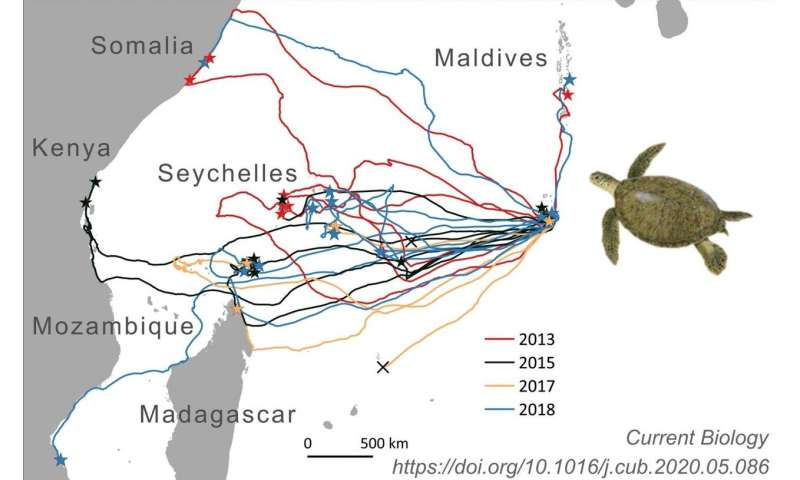Conservation Africa News - Wonders of animal migration: How sea turtles find small, isolated islands