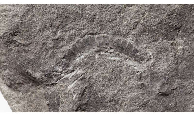 World's oldest bug is fossil millipede from scotland