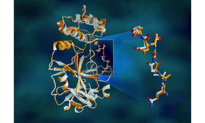 X-rays size up protein structure at the 'heart' of COVID-19 virus