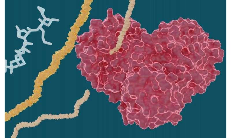 Un estudio de rayos X explora el potencial de los medicamentos contra la hepatitis C para tratar el COVID-19