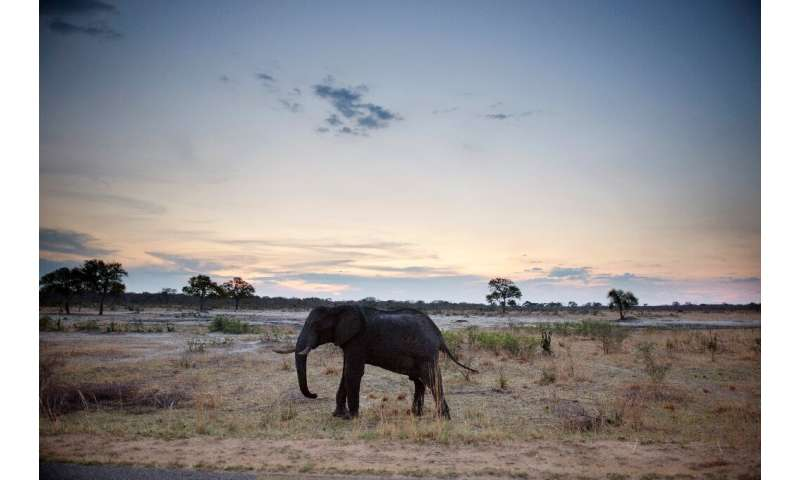 Zimbabwe's elephants are believed to be suffering from a bacterial infection, which has killed at least 34 so far