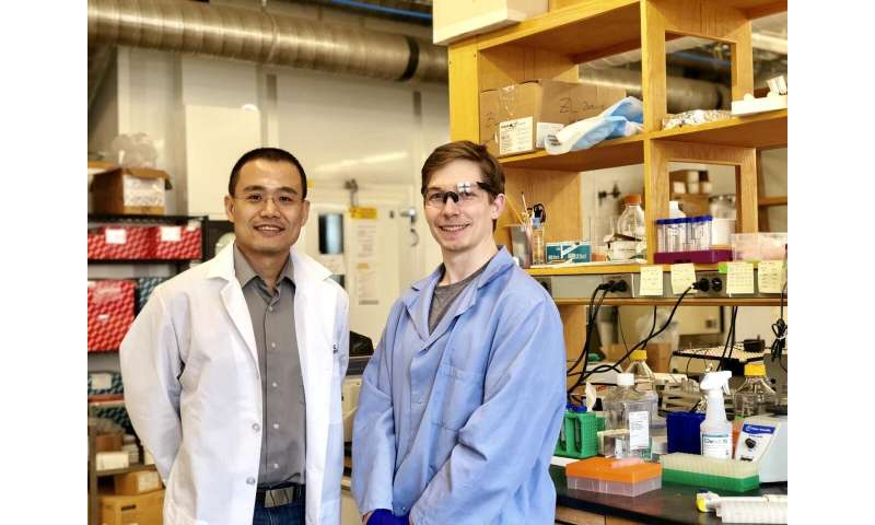 Princeton team discovers new organelle involved in cancer metastasis