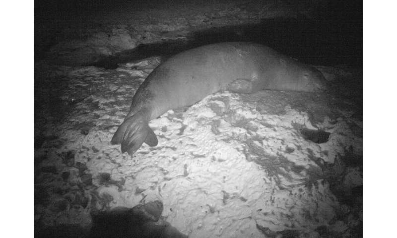 Rarest seal breeding site discovered