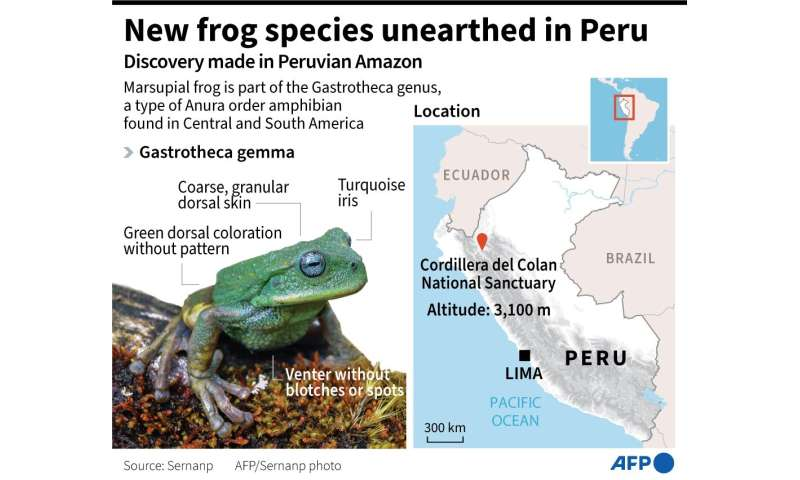 New species of frog discovered in Peru