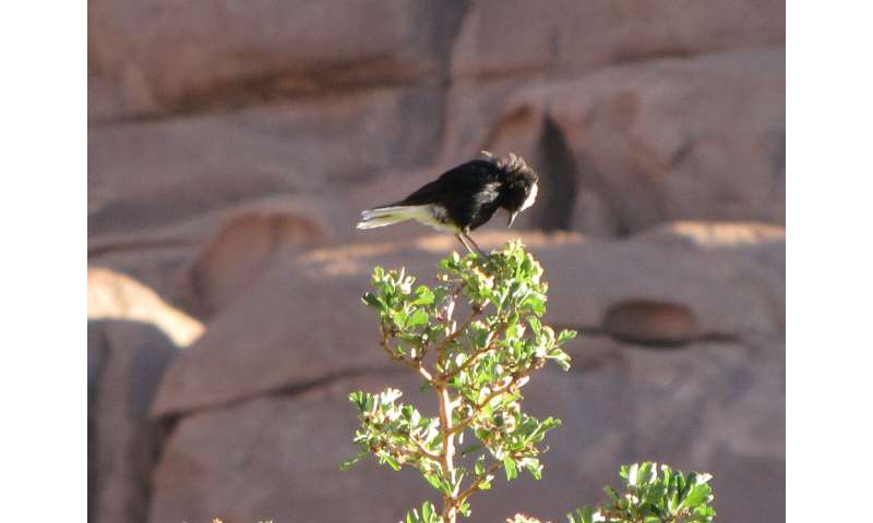 How to count birds when every bird counts: choosing the best approach in desert mountains