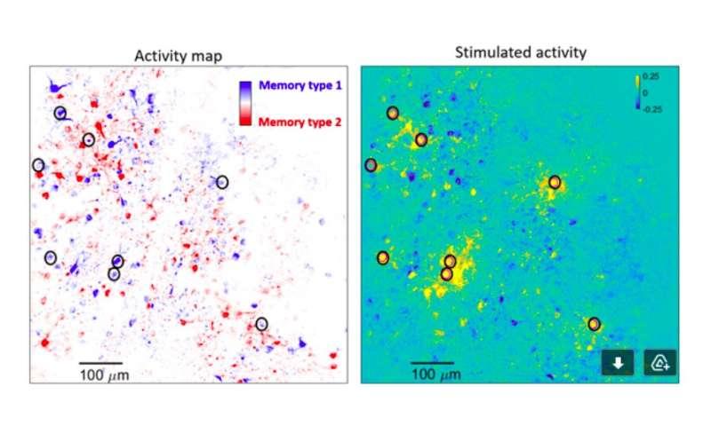 Neuroscientists identify brain circuit motifs that support short-term memory