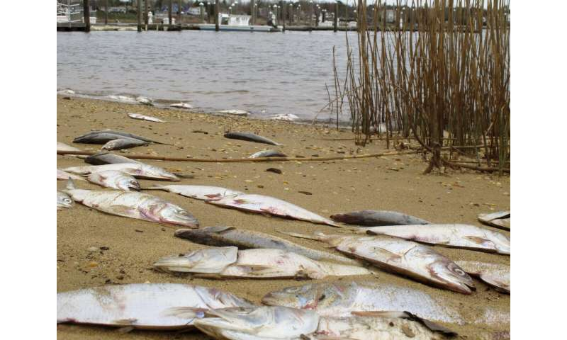 NJ blames bacteria for dead fish in rivers, bays since fall