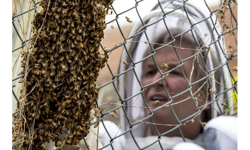 Scientists decry death by 1,000 cuts for world's insects