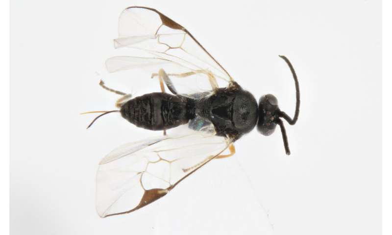 School students discover four new species of wasp