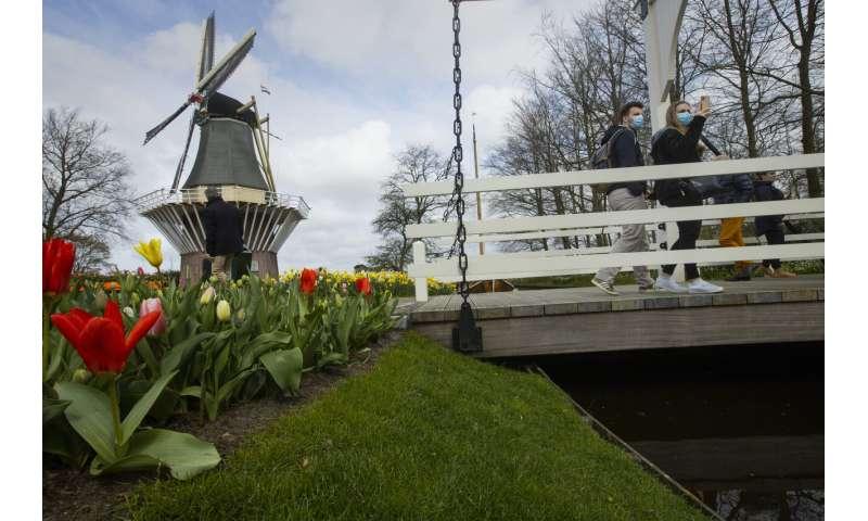 Visitors tiptoe through the tulips in Dutch virus test