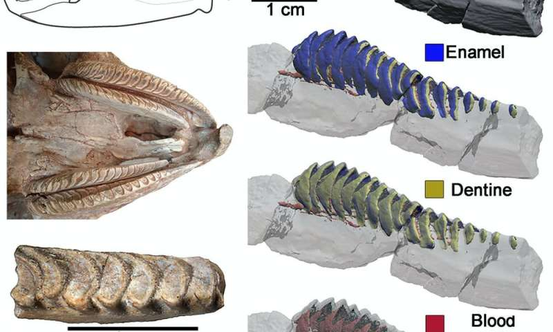 A 95-million-year-old reptile's solution to the problem of tooth wear