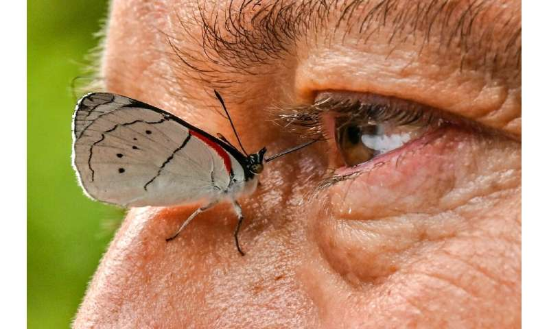 A butterfly settles on the side of Juan Guillermo Jaramillo's nose