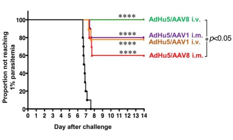 A novel malaria vaccine vector - target to the liver