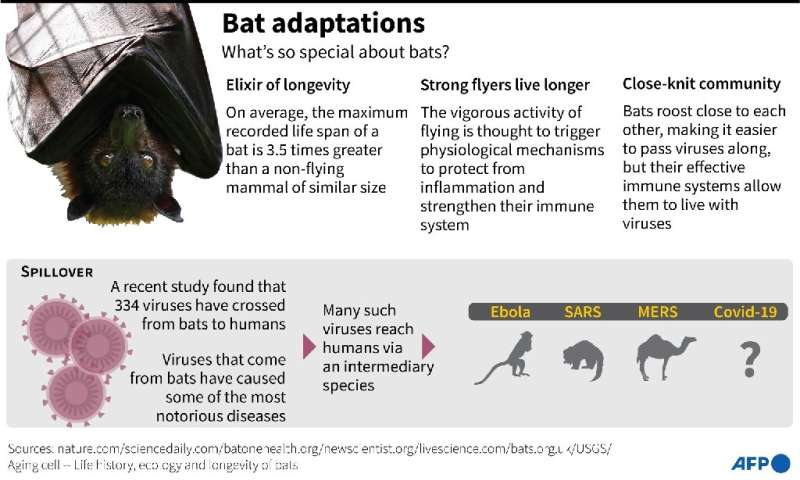 Adaptations made by bats that make them interesting to science
