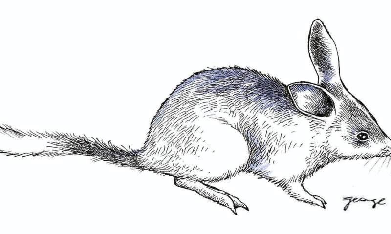 Ancient bilby and bandicoot fossils shed light on the mystery of marsupial evolution
