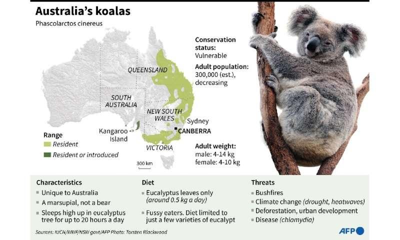 Australia's koalas